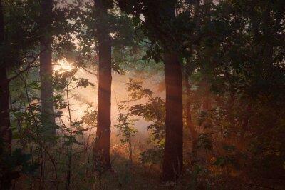 Image Matin, brouillard, forêt
