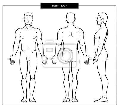 Image men's body and anatomy