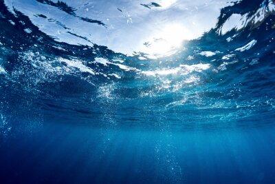 Image Mer Bleue
