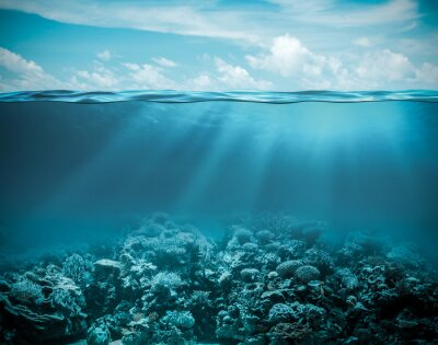 Image Mer ou de l'océan sous-marin, nature, fond profonde