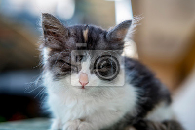 noir chatte pics Close UPS chatte serrée anime