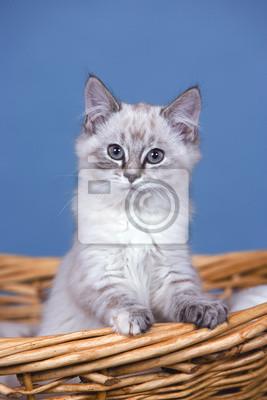 photos de chattes chauve xhamster lesbienne gicler