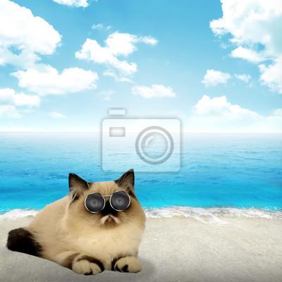Mignon chat persan