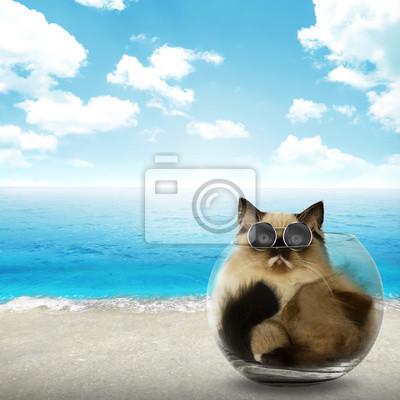 Mignon chat persan intérieur de bol en verre