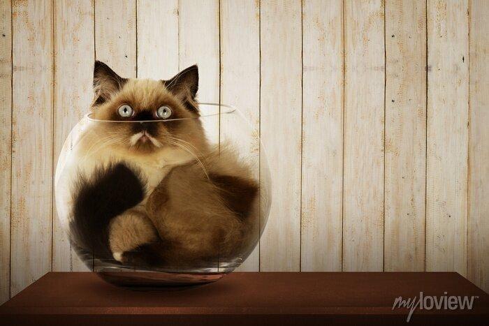 Image Mignon chat persan intérieur de bol en verre