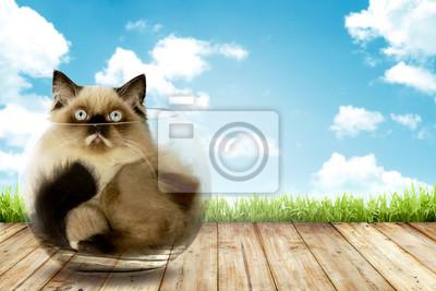 Mignon chat persan intérieur de bol en verre avec fond de ciel bleu