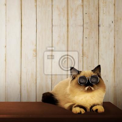 Mignon chat persan sur la table
