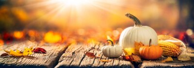 Image  Mini Pumpkins, Corn And Leaves On Wooden Harvest Table With Sunlight - Thanksgiving / Harvest Background