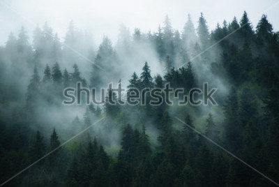 Image Misty landscape with fir forest in hipster vintage retro style