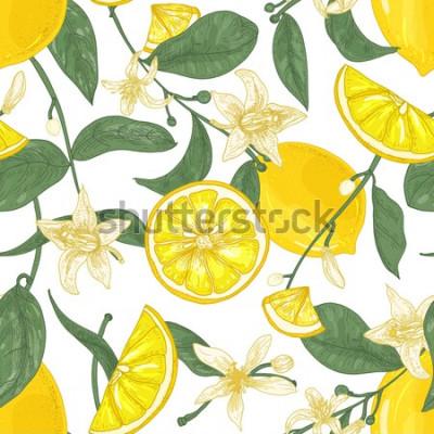 Image Modèle sans couture avec citrons juteux frais, entiers et coupés en morceaux, des fleurs et des feuilles sur fond blanc. Toile de fond aux agrumes. Illustration vectorielle botanique dans un style ant
