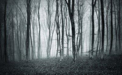 Image Monochrome noir et blanc grunge texturé couleur foggy mystique paysage des arbres forestiers.