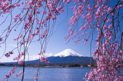 Mont Fuji Avec La Fleur De Cerisier Peintures Murales Tableaux Cerisiers En Fleurs Mt Sakura Myloview Fr