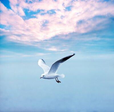 Image mouette flambée contre un ciel nuages