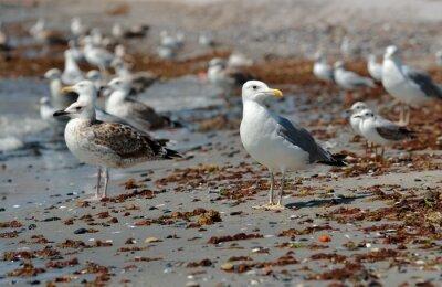 Image Mouette sur la plage