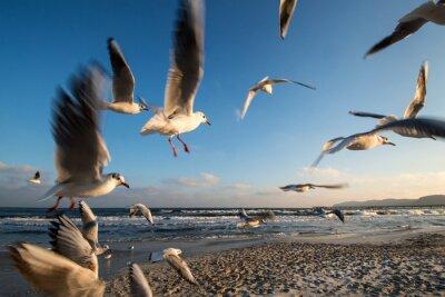 Image Möwen im Flug Ostseeküste Binz Allemagne
