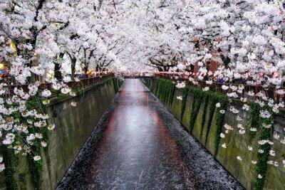 Image Nakameguro Kanal à Tokio à partir de Kirschblüte im Frühling