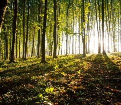 Image nature. coucher du soleil dans les bois