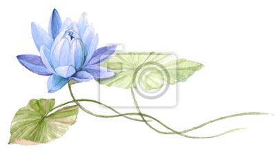 Nenuphar Ou Fleur De Lotus Sur Leau Bleu Dessin Tire Par