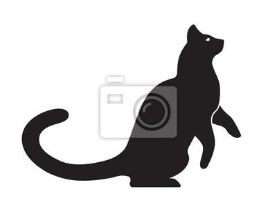 Blanc coqs noir chatte