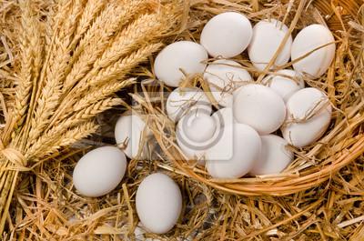 œufs blancs