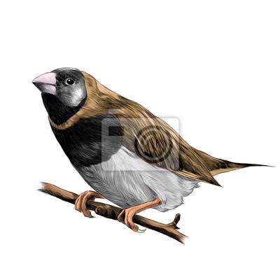 Oiseau De Pinsons Assis Sur Une Branche Dun Arbre Croquis Vecteur