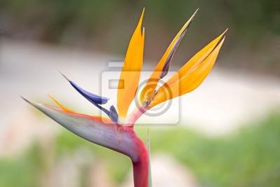Oiseau Paradis Fleur Peintures Murales Tableaux Oiseau De