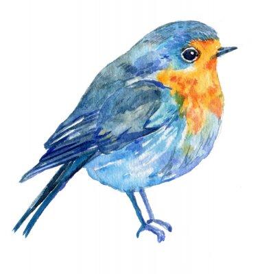 Image Oiseau sur un fond blanc .illustration aquarelle