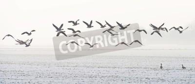 Image Oiseaux, voler, au-dessus, neigeux, champ, hiver