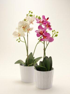 Image Orchidea