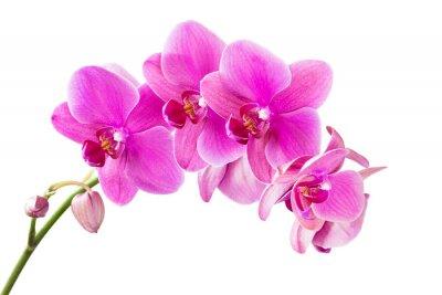 Image Orchidée
