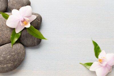 Image Orchidée.