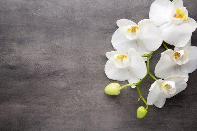 Image Orchidée blanche sur le fond gris.