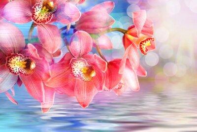 Image Orchidée, fleur, fin, haut