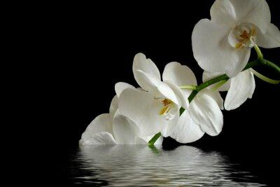 Image orchidée, fleur réflexion