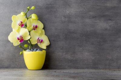 Image Orchidée jaune sur le fond gris.