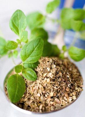 Image Orégon frais et séché / Origanum vulgare