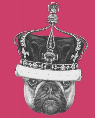 Image Original drawing of French Bulldog with crown. Isolated on colored background