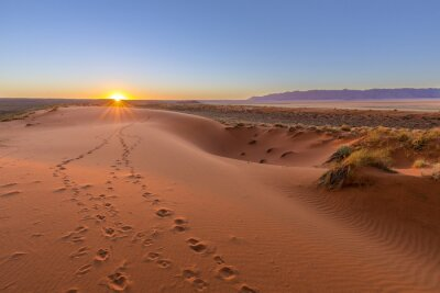 Image Oryx tracks to sunset