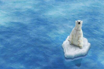 Image Ours Blanc / Fonte des glaces