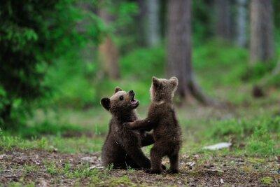 Image Oursons bruns jouant dans la forêt