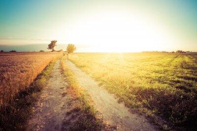 Image Paesaggio di campagna e campi di grano al tramonto