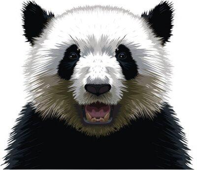 Image PANDA - Buste