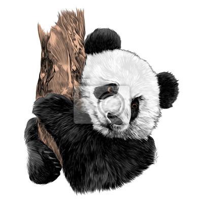 Image Panda Croquis Graphiques Vectoriels Accrochés à Un Dessin De