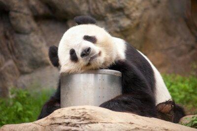 Image Panda de sommeil