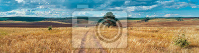 Image Panoramic landscape of central Russia agricultural countryside with hills and country road. Summer landscape of the Samara valleys. Russian countryside. High resolution file for large format printing.