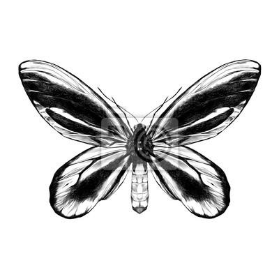 Aile De Papillon Dessin papillon avec motif noir sur les ailes de la vue symétrique