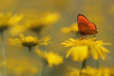 Image papillon dans le jardin