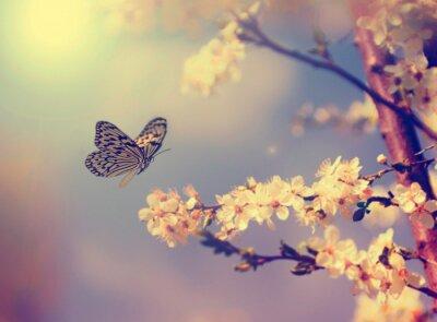 Image Papillon et la fleur de cerisier