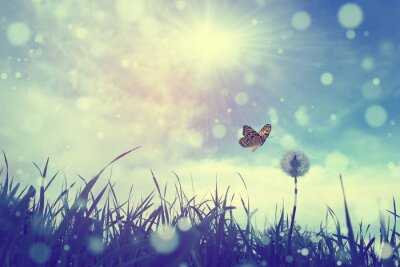 Image Papillon et le pissenlit