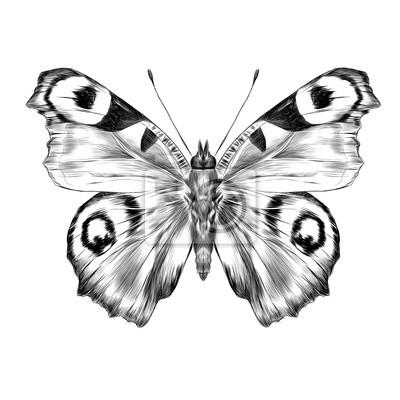 Aile De Papillon Dessin papillon, ouvert, ailes, haut, vue, symétrique, dessin, graphiques